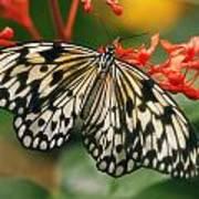 Paper Kite Butterfly Print by Cindi Ressler