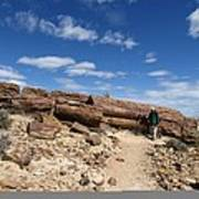 Petrified Forest, Argentina Print by Science Photo Library