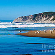 Pt Reyes National Seashore Print by Bill Gallagher