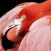 Flamingo Print by Paulette Thomas