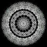 Kaleidoscope Ernst Haeckl Sea Life Series Black And White Set On Print by Amy Cicconi