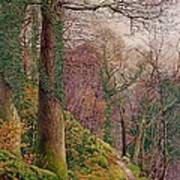 A Path In The Wood Print by Edward Bentley