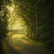 A Path To The Light Print by Evelina Kremsdorf
