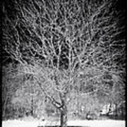 A Tree In The Snow Print by John Rizzuto