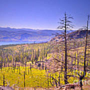 A View From Okanagan Mountain Print by Tara Turner