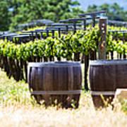 A Vineyard With Oak Barrels Print by Susan  Schmitz