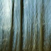 A Walk In The Woods IIi Print by Bob Retnauer