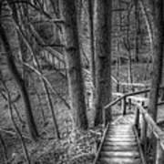 A Walk Through The Woods Print by Scott Norris