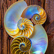 Abstract Chambered Nautilus Print by Garry Gay