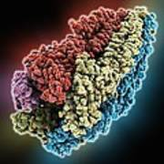 Acetylcholine Receptor Molecule Print by Science Photo Library