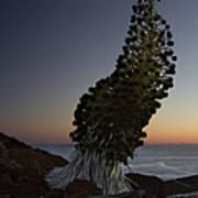 Ahinahina - Silversword - Argyroxiphium Sandwicense - Summit Haleakala Maui Hawaii Print by Sharon Mau