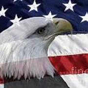 American Flag And Bald Eagle Print by Jill Lang