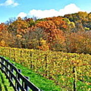 Amish Vinyard Two Print by Frozen in Time Fine Art Photography