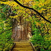 An Old Growth Douglass Fur In The Grove Of The Patriarches Mt Rainer National Park Print by Jeff Swan