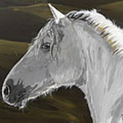 Andalusian Foal Print by Janina  Suuronen