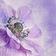 Anemone Print by Priska Wettstein