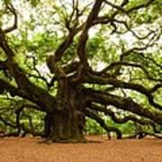 Angel Oak Tree 2009 Print by Louis Dallara