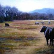 Angus Steer In Franklin Tn Print by Janet King