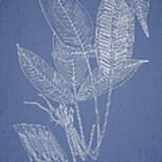 Anisogonium Lineolatum Print by Aged Pixel