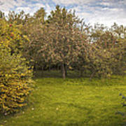 Apple Orchard Print by Amanda And Christopher Elwell