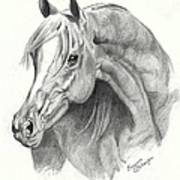Arabian Stallion Print by Suzanne Schaefer