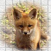Artistic Cute Kit Fox Print by Thomas Young