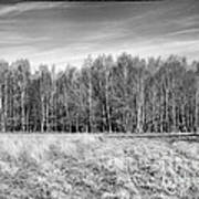 Ashdown Forest Trees In A Row Print by Natalie Kinnear
