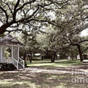 Austin Texas Southern Garden - Luther Fine Art Print by Luther  Fine  Art