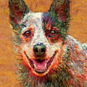 Australian Cattle Dog Print by Jane Schnetlage