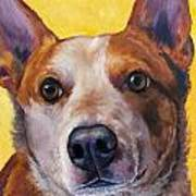Australian Cattle Dog Red Heeler On Yellow Print by Dottie Dracos