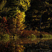 Autumn At It's Finest Print by Thomas Young