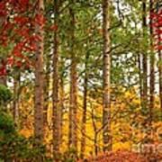 Autumn Canvas Print by Carol Groenen