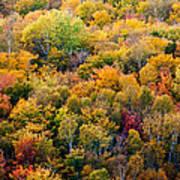 Autumn Colors Print by Matt Dobson