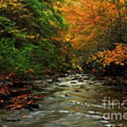 Autumn Creek Print by Melissa Petrey