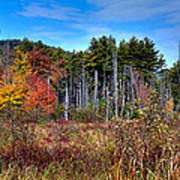 Autumn In The Adirondacks Print by David Patterson