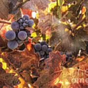 Autumn In The Vineyard Print by Michele Steffey