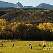 Autumn Pastures Along The Virgin River Rockville Utah Print by Robert Ford