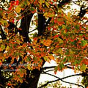 Autumn Smile Print by Jaime Lind