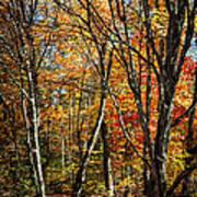 Autumn Trees Print by Elena Elisseeva