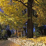 Autumn Wall - Fm000082 Print by Daniel Dempster
