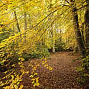 Autumnal Woodland II Print by Natalie Kinnear