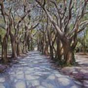 Avenue Of The Oaks Print by Henry David Potwin