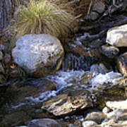 Babbling Brook Print by Barbara Snyder