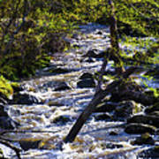 Babbling Brook Print by Bill Cannon