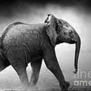 Baby Elephant Running Print by Johan Swanepoel