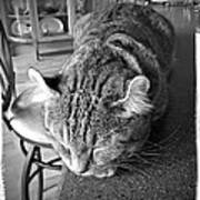 Bad Cat Print by Susan Leggett