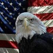 Bald Eagle 321 Print by Joyce StJames