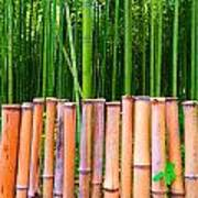 Bamboo Fence Print by Julia Ivanovna Willhite