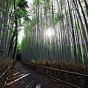 Bamboo Forest Path Of Kyoto Print by Daniel Hagerman