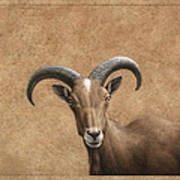 Barbary Ram Print by James W Johnson